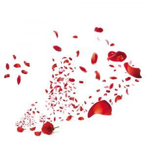 Selyem rózsaszirmok- Kosarak-Sziromkilövő ágyúk
